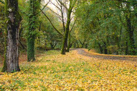 Autumnal landscape with fallen leaves