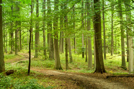 Green forest landscape