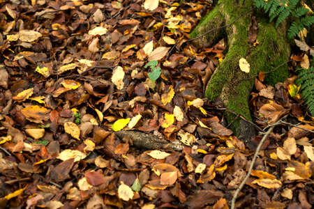 Fallen leaves autumnal background