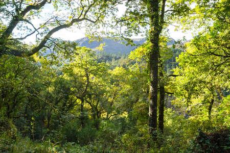 Green landscape in Peneda Geres National Park, Portugal