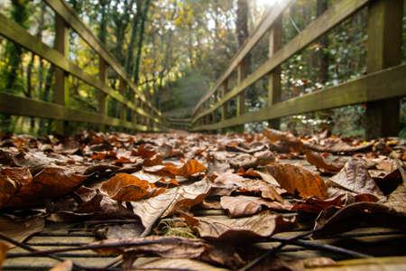 Detail of fallen leaves on wooden footbridge