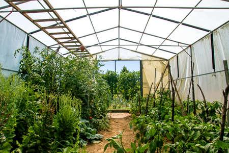 Growing organic food in a greenhouse Stock fotó