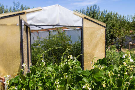 Kitchen garden with a hothouse Stock fotó