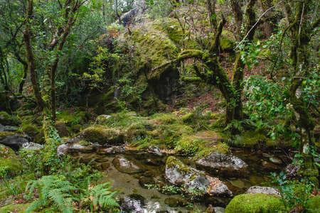 Mossy woodland Mata da Albergaria, temperate broadleaf and mixed fores in Peneda-Gerês National Park, Portugal Standard-Bild