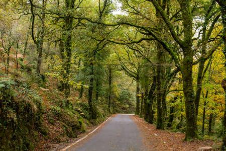 Road in Mata da Albergaria, temperate broadleaf and mixed forest in Peneda-Gerês National Park, Portugal Standard-Bild