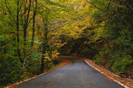 Curvy road in Mata da Albergaria, temperate broadleaf and mixed forest in Peneda-Gerês National Park, Portugal