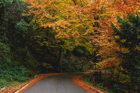 Curvy road in autumnal Mata da Albergaria, temperate broadleaf and mixed forest in Peneda-Gerês National Park, Portugal