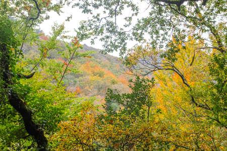 Autumnal Mata da Albergaria, temperate broadleaf and mixed forest in Peneda-Gerês National Park, Portugal Standard-Bild