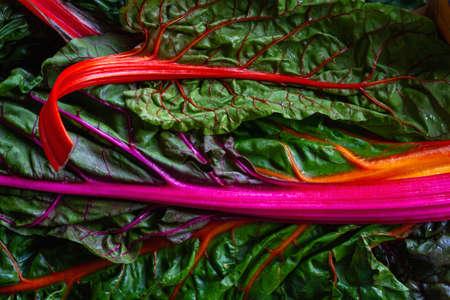 Colorful leaf beet raimbow swiss chards red-stemmed edible leaves Standard-Bild