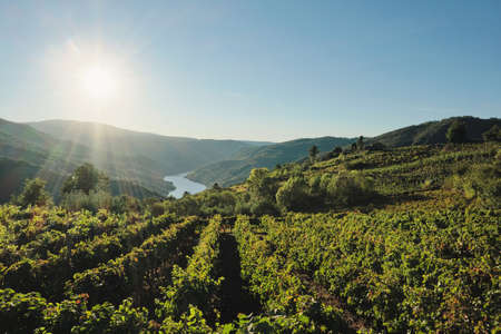 Vineyards in Ribeira Sacra and Sil river canyon in the background, Galicia, Spain Standard-Bild