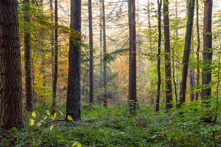 Mixed woodland in autumn with deciduous and evergreen trees