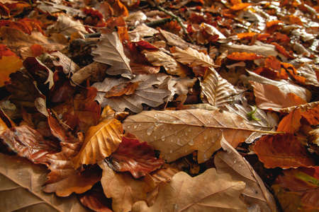 Deciduous trees autumn fallen leaves in the forest ground