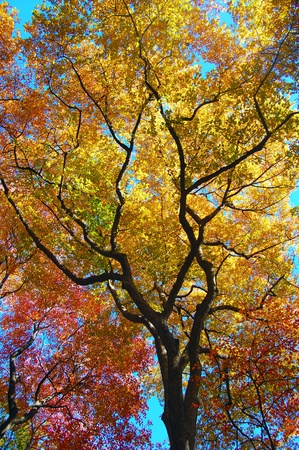 quarterly: leaves changing colors as fall sets in