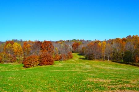Vibrant Fall Foliage Colors in the Trees Фото со стока - 11250723