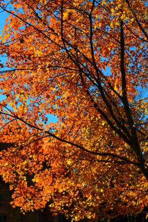quarterly: Fall Leaves changing colors  Stock Photo