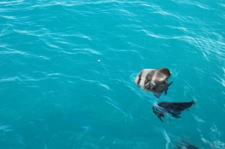 whitsunday: Tropical saltwater fish coming to the surface for a piece of food