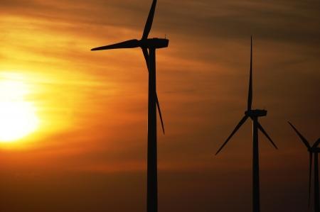 biofuel: Wind Turbines on Wind Farm at Sunset