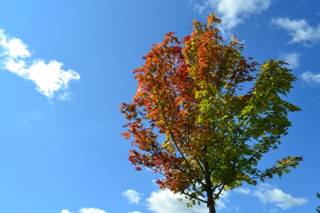 Tree Leaves Changing Colors in the Fall Season Against a Blue Sky Фото со стока