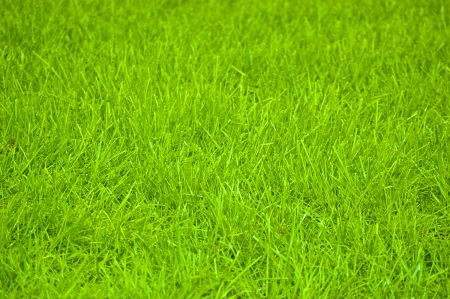 Vibrant and Lush Green Grass