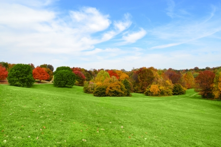 changing colors: Trees Changing Colors at the Park in the Fall Season Stock Photo