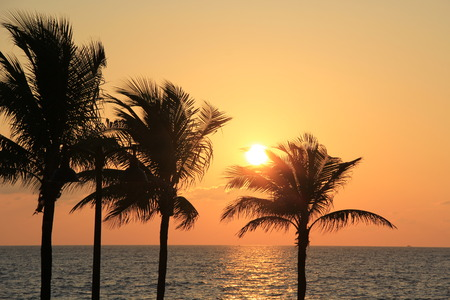 timeshare: Beautiful sunrise over the ocean behind silhouettes of palm trees