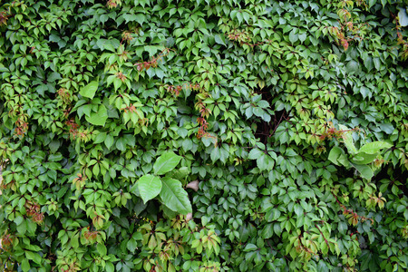 Green Plants Texture