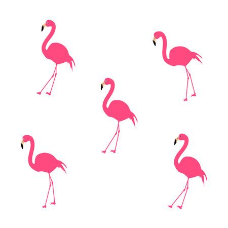 Flamingo, Vector Illustration, Background 向量圖像