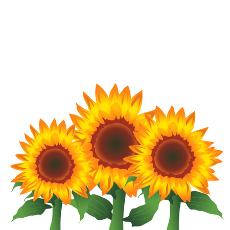 Sunflowers, Vector Illustration 版權商用圖片 - 117688200