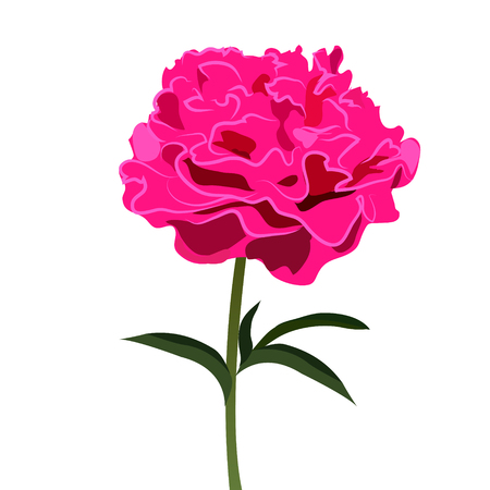 Pink Peony flower, Vector Illustration Illustration