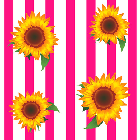 Sunflowers, Pink and White Stripes Background 版權商用圖片 - 117687613