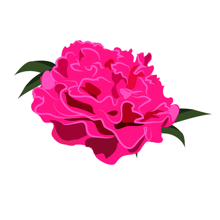 Peony Flower, Vector Illustration Иллюстрация