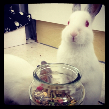 otganimalpets01: Habby bunny at lunch time Stock Photo
