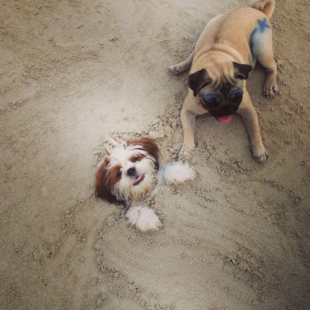 otganimalpets01: Fun on the beach