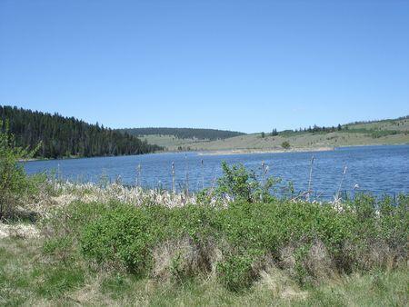 bulrushes: Marshland scenic