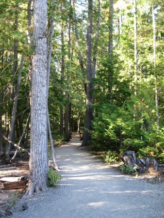 wooded path: Path into wooded area Stock Photo