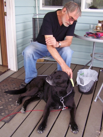 dog grooming: Grooming the dog again Stock Photo