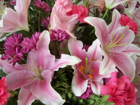 Fresh pink lilies and flowers
