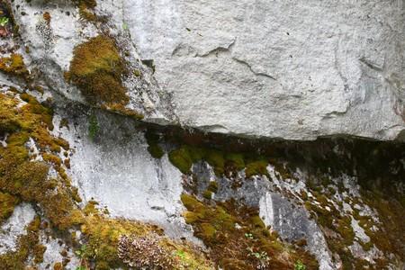 lichen: Nature abstract Lichen 1