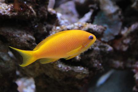 Colored seabed fish in aquarium Stock Photo