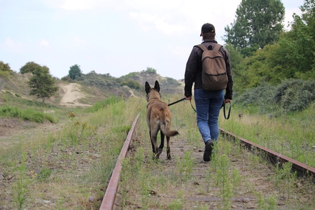 A master and his Malinois Belgian shepherd who walks along the rails Stock Photo