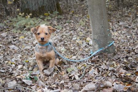 その小さな犬は捨てられるために木に縛られている 写真素材 - 94961078