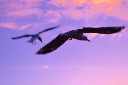flying coffin: Seagulls in Coffin Bay in South Australia Stock Photo