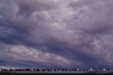 flock of pigeons on a rooftop in the Coonawarra in South Australia photo