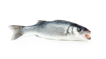 Fresh sea bass fish, isolated on white