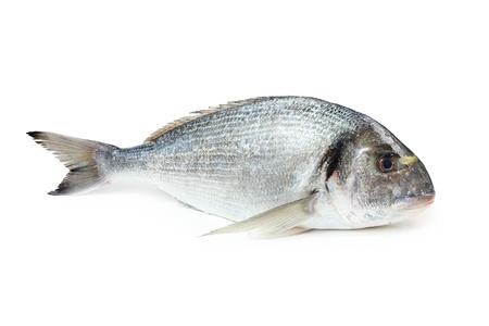 Gilt 頭の鯛、白で隔離されます。