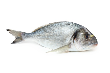 Gilt-head sea bream, isolated on white Stock fotó