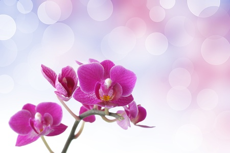 Pink orchid against bokeh background Stock Photo - 8386838