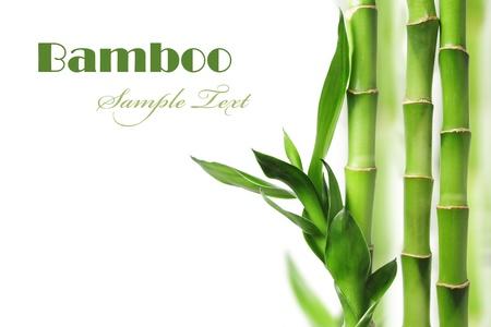 Bambusz Stock fotó