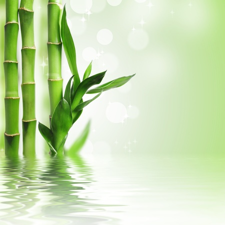 Green bamboo against bokeh background photo