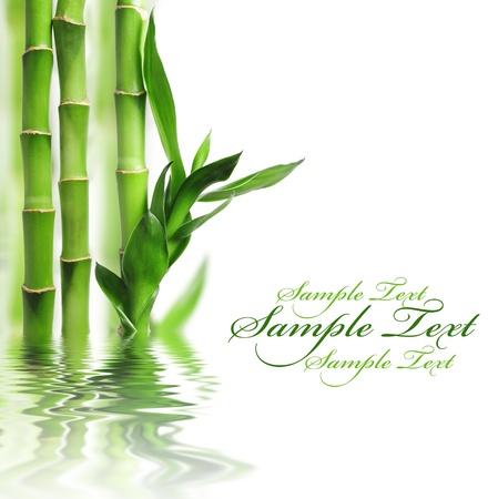 bambu: Frontera de bamb� verde con espacio de copia